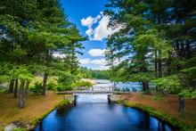 Bridge And Pine Trees At Bear ...