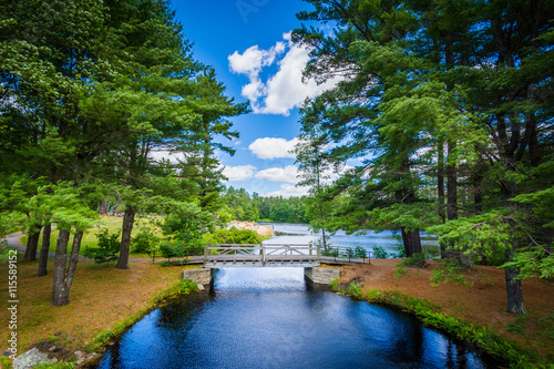 Poster de jardin Arbre Bridge and pine trees at Bear Brook State Park, New Hampshire.