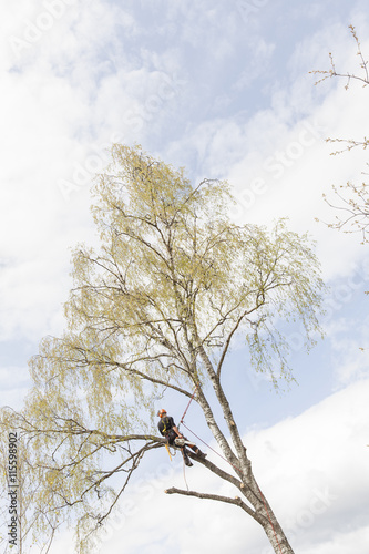 Sweden, Sodermanland, Jarna, Tree surgeon high up on birch tree