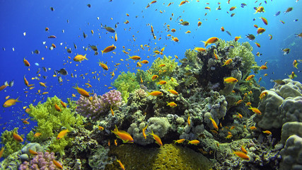 Fototapeta.Tropical Fish on Vibrant Coral Reef