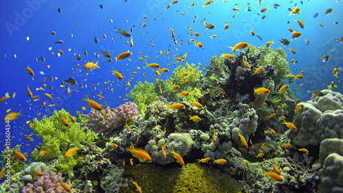 .Tropical Fish on Vibrant Coral Reef - 115604340