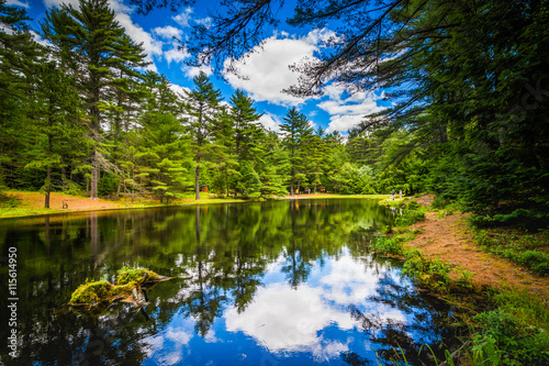 Fotografie, Obraz  The Archery Pond at Bear Brook State Park, New Hampshire.
