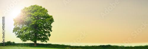 Lonely Oak Tree Sunset