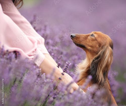 Kobieta i pies w lawendzie - 115637716