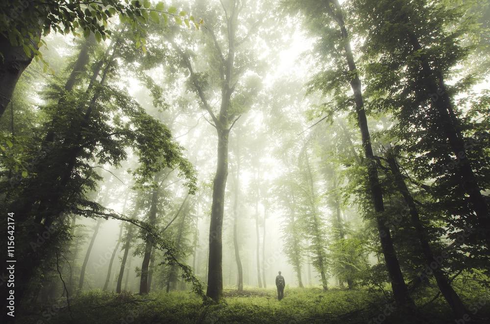 Fototapety, obrazy: green woods with man walking
