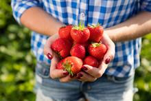Frau Mit Hand Voller Frischer Erdbeeren
