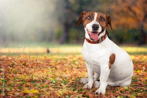 Dog. - 115655166