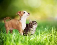 Kitten And Puppy In Long Green Grass