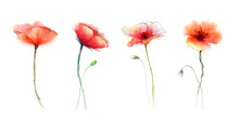 Watercolor Painting Poppy Flow...