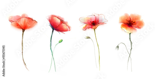 Obraz Watercolor painting poppy flower. Isolated flowers on white background. Set of Pink and red poppy flower painting. Hand painted watercolor floral, flower background. - fototapety do salonu