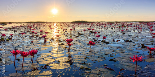 Garden Poster Lotus flower The sea of red lotus, Lake Nong Harn, Udon Thani, Thailand