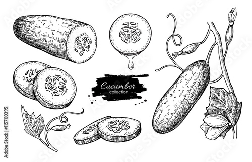 Cucumber hand drawn vector set. Isolated cucumber, sliced pieces Canvas Print