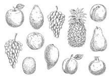 Sketch Of Vegetarian Fruits In...