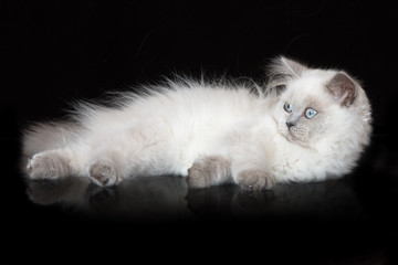 Fototapeta Kot adorable fluffy kitten on blakc background