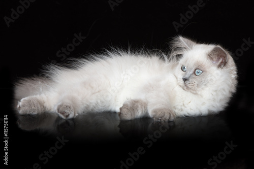 adorable fluffy kitten on blakc background - 115750114