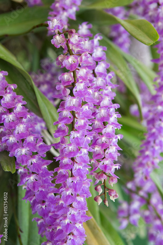 Fotobehang Lilac Purple orchid flowers in garden