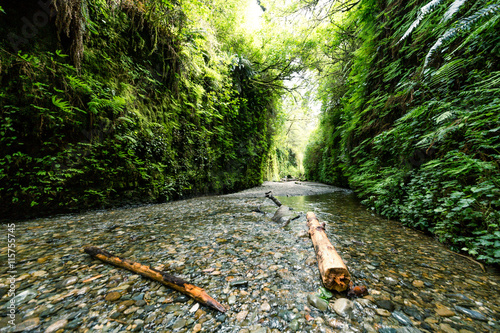 Photo Stands Canyon Scenic Fern canyon with creek and fallen trees.
