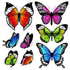 Fototapeta Motyle butterflies design
