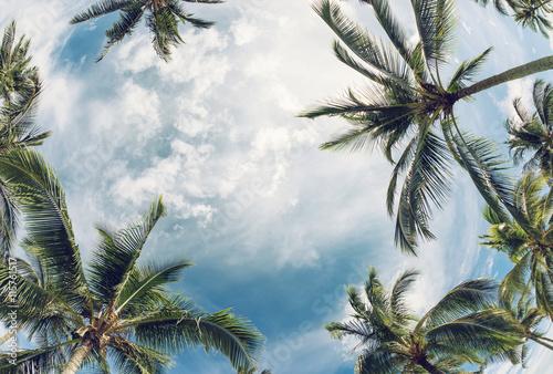 Papiers peints Palmier Palm tree tops against sky