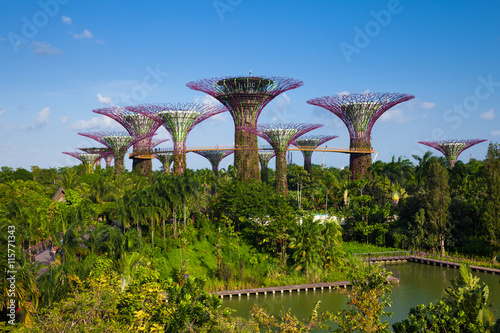 Tuinposter Singapore Daytime view of the Supertree grove at Gardens By The Bay, Singa