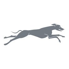 Vector Silhouette Of Running Dog Whippet Breed