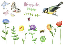 Watercolor Set Of Nature Objects Isolated On White