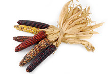 Cob Corn Indian Isolated On Wh...