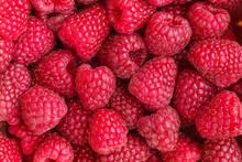 Fresh Red Raspberries