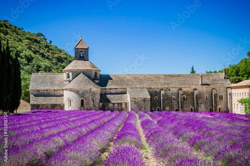 In de dag Lavendel Champs de lavandes devant l'Abbaye Notre-Dame-de-Sénangue