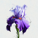 watercolor collection of irises