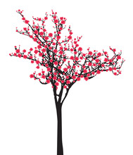 One Pink Full Bloom Sakura Tree (Cherry Blossom) Isolated On White Background