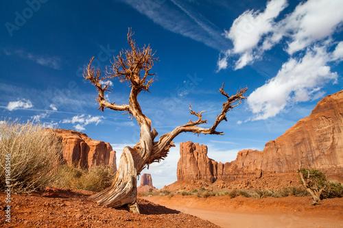 Obraz tree monument valley - usa - fototapety do salonu