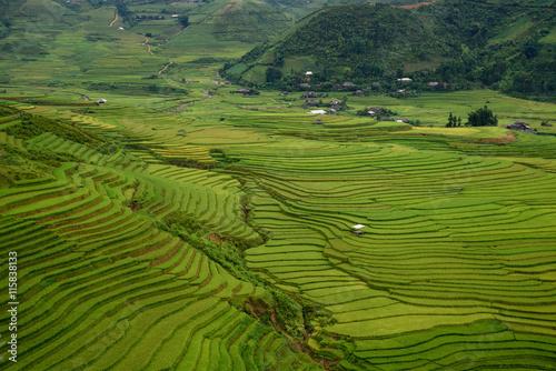 Foto auf Gartenposter Reisfelder Rice fields on terraced