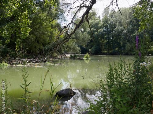 Cuadros en Lienzo View at Danube floodplains in Slovakia in summer