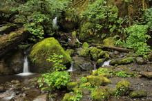 Regenwald Bei Quinault