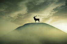 Silhouette Lonely Deer With Long Horns Standing On Hill Hazy Dreamy Foggy Sunset