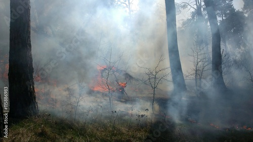 Photo Stands Roe The trees burning in forest fire