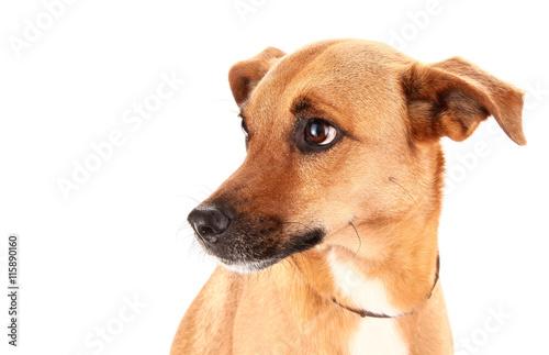 Schöner adoptierter Mischlingshund Fototapete