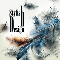 Creative vector background with blue feathers and signature styl