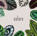 Trendy slogan nature on a gray background in a frame of hand painted begonia leaves. Decorative fashion vector wallpaper - 115915787