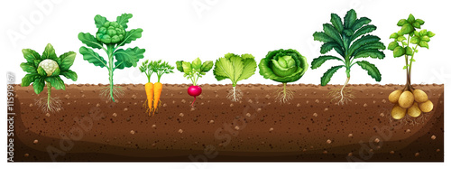Vegetables growing from underground Canvas Print