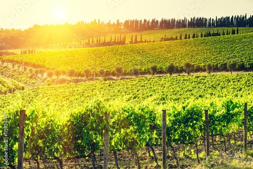 Foto  Chianti vineyard