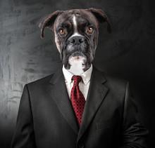 Cane Vestito Da Uomo D'affari