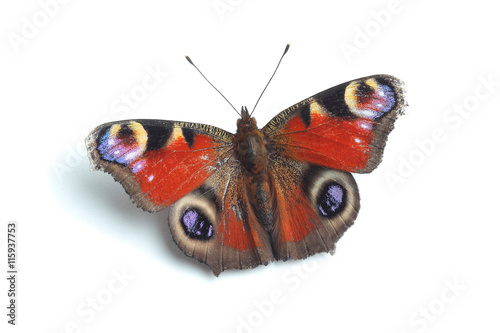 Stickers pour porte Paon European Peacock (Inachis io) isolated on white