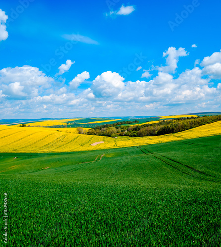 Spoed Fotobehang Groene Wavy meadows spring landscape in South Moravia, Czech Republic
