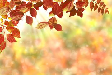 Obraz na Plexi Herbst 126