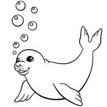 Coloring Pages. Little Cute Baby Seal Swims.