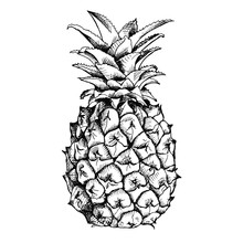 Image Of Pineapple Fruit. Vect...