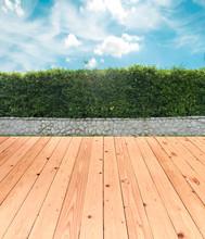 Brick Wall And Ornamental Shrub With Wood Floor