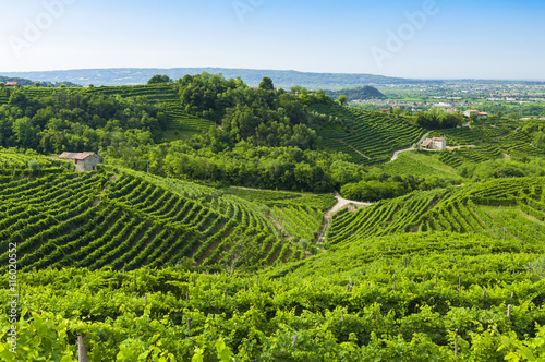 Photo sur Aluminium Vignoble View of Prosecco vineyards from Valdobbiadene, Italy during summ